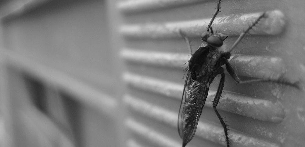 komarniki proti mrčesu